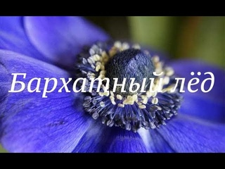 """Эстафета цветы в украшениях  Брошь """"Синий лед"""""""