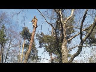 Спил аварийных и опасных деревьев