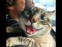 🐈 Сумасшедшие кошки ! 🐈 Подборка смешных котов и котят для хорошего настроения! 😸