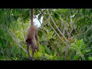 Into the Wild Colombia : S1, E2 «The Hummingbird's Quest» (Smithsonian Channel  2016 US) (ENG/SUB ENG)