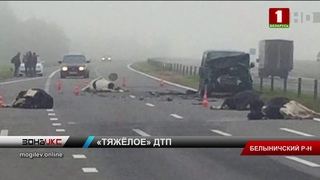 Микроавтобус врезался в стадо коров, 4 животных погибли. Зона Х