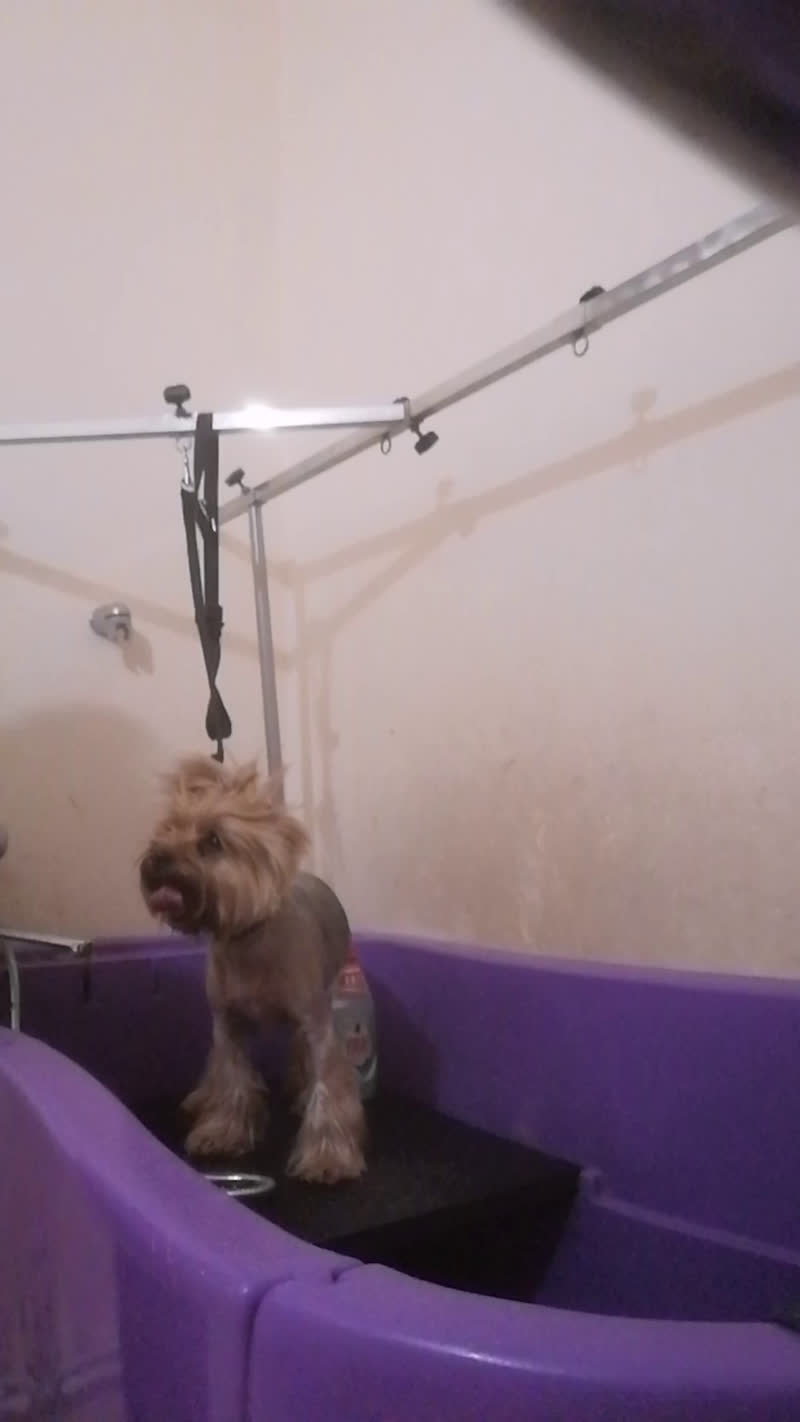 Live: Стрижка собак и кошек в Волхове Тримминг
