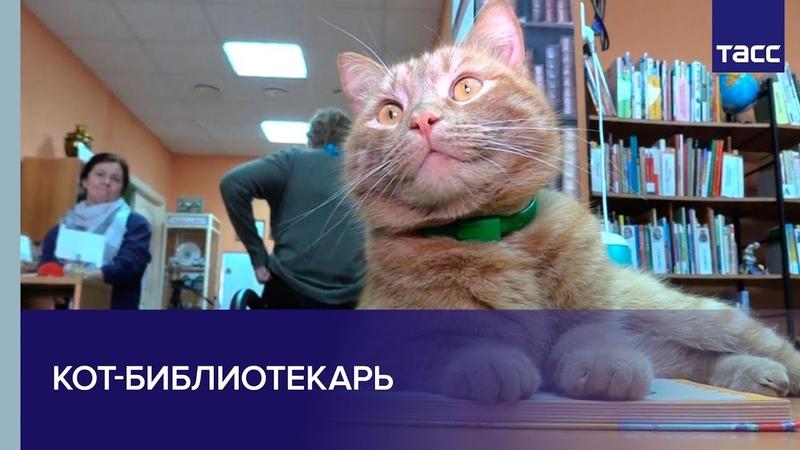 Кот библиотекарь из Тверской области