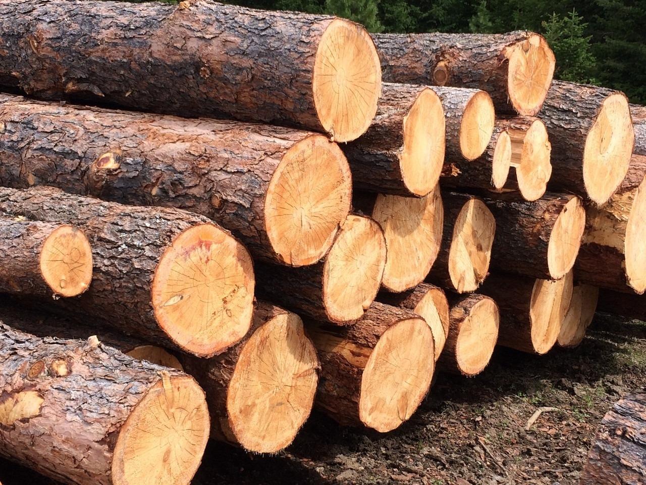 В Подмосковье проходят рейды по выявлению фактов незаконной перевозки древесины