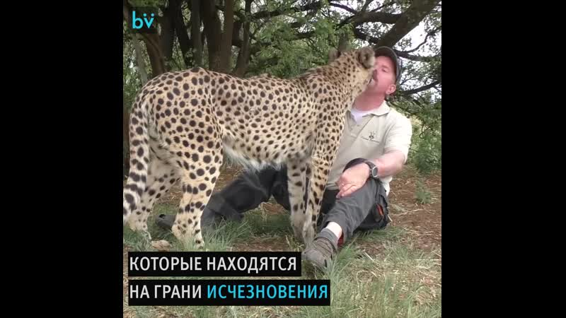 Дольф Волкер и его большие котики