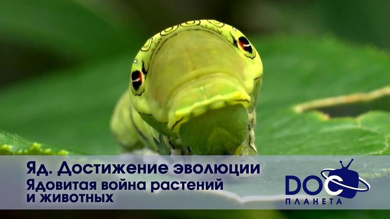 Яд Достижение эволюции Часть 3 Ядовитая война растений и животных Документальный фильм