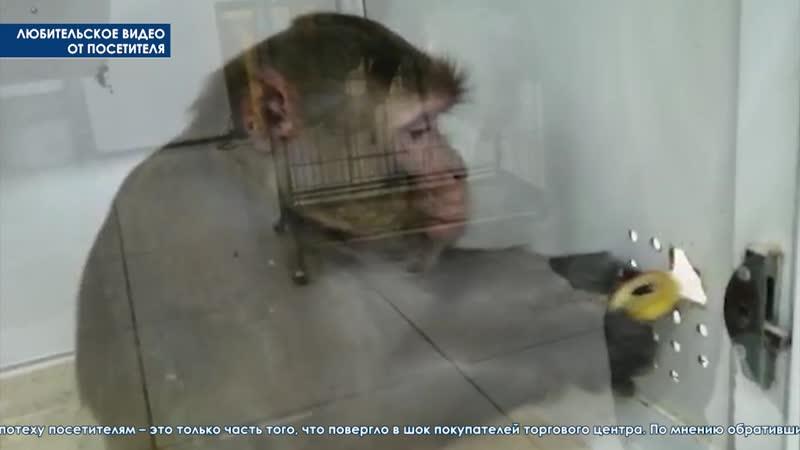 Контактный зоопарк вне закона Прокуратура проверит гастролеров которые разместились в ТЦ Небо
