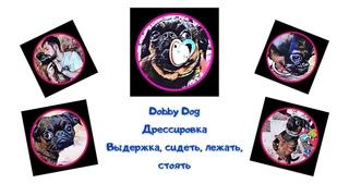Dobby Dog. Дрессировка собаки #1 Базовые команды. Выдержка,  сидеть, лежать, стоять.