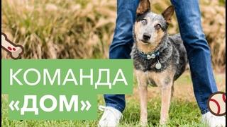 Как научить собаку команде «Дом». Дрессировка собак