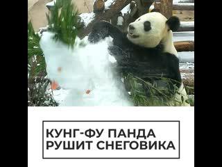 Панда атаковала  снеговика