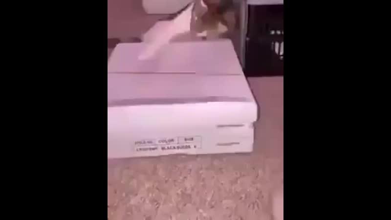 смешные коты играют саундтрек к полицейскому с беверли хиллз