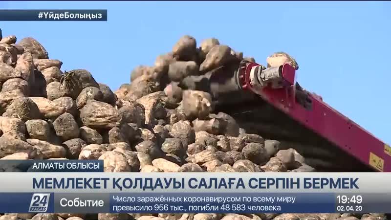 Алматы облысының шаруалары биыл 1 млн гектар жерді игермек