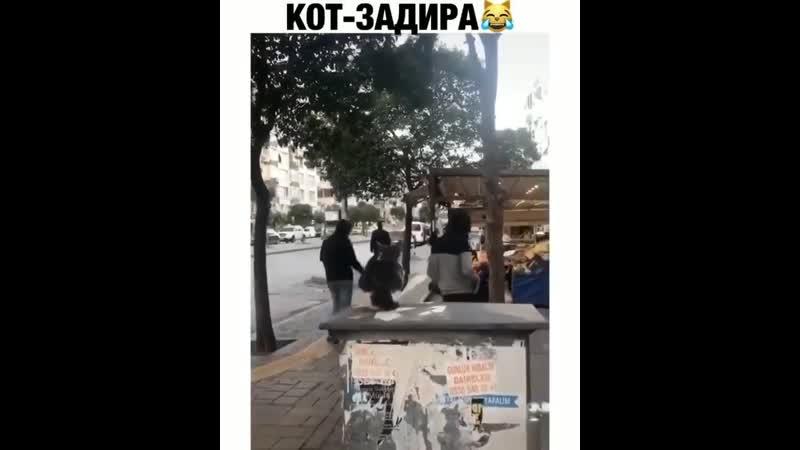 кот-задира