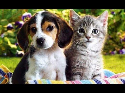 Домашние животные_Изучаем домашних животных и интересные факты о них