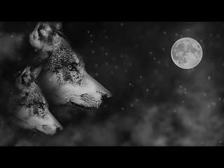 Que Je T'aime - Johnny Hallyday Karaoke, Lyrics, Video