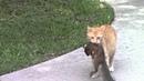 Самые смешные животные / Приколы с котами и собаками 2021 20