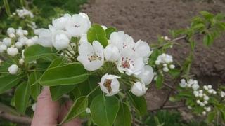 Мой цветущий майский сад)))