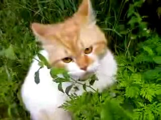 Кот  на 8 сикунде скажет: Ооооооо, чуваки!=)
