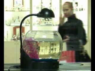 аквариумистика, аквариумные животные