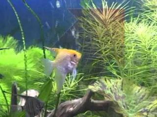 Жизнь с животными, аквариумные рыбы.