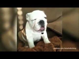 Igualdad Animal  - El vídeo más adorable que verás hoy