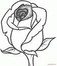 drawings of roses - HD1244×1446