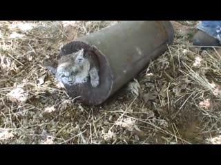 Спасение животных - трогательное видео 😭