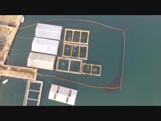Китовая тюрьма: в Приморье беспилотник заснял вольеры с десятками белух и косаток