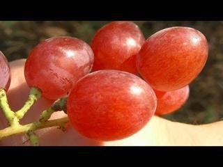 Бесполезные сорта винограда,заменяю.