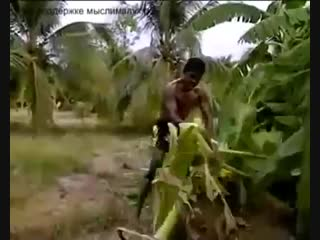 Легенда тайского бокса ломает пальму