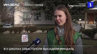В 11 школах Севастополя высадили миндаль