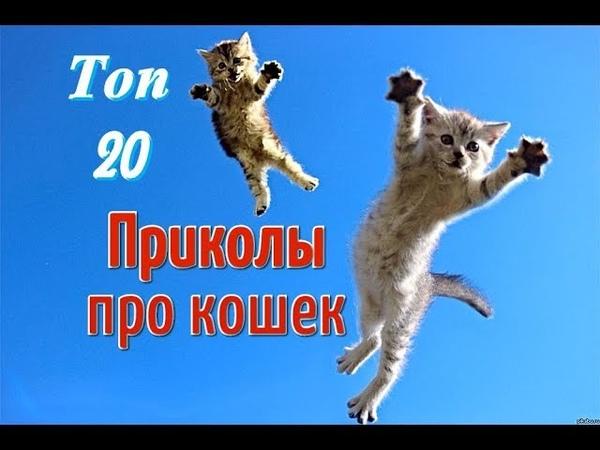 Приколы с кошками и котами Топ 20 Самая интересная ПОДБОРКА смешных видео с котиками и кошечками