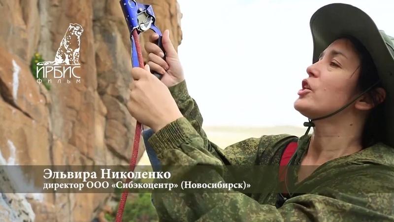 Тува2020 Сокол балобан Заповедник Убсунурская котловина