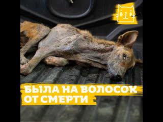 Изможденная собака Поппи была на волосок от смерти