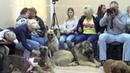 Брифинг против списка опасных пород собак. r-risk 7 926-220-56-03 Татьяна Ягодкина