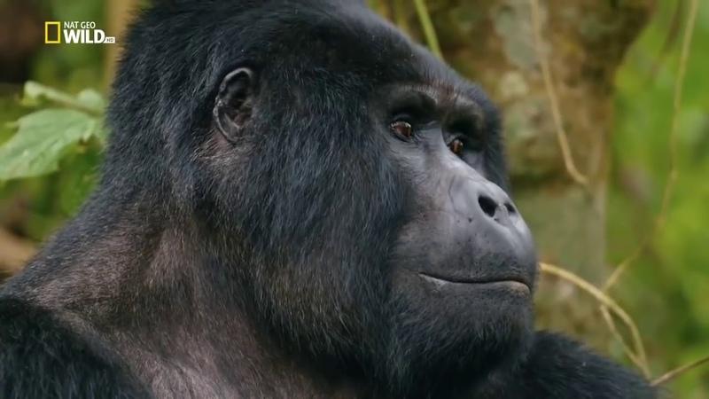 НОВИНКА Дикая Уганда 2019 Документальный фильм Discovery