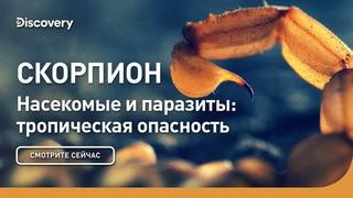 Скорпион | Насекомые и паразиты: тропическая опасность | Discovery