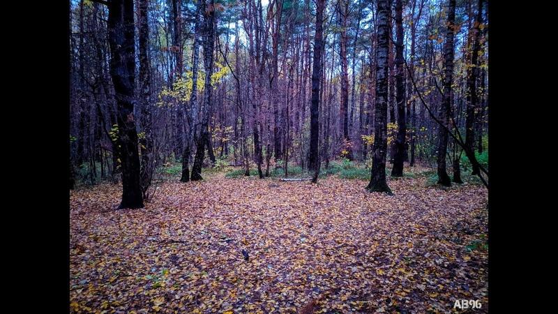 Ромашковский лес ранним утром