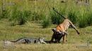 Безумные Битвы Животных Снятые на Камеру / ТОП 10