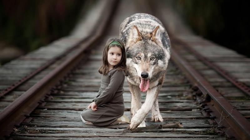 Хромой волк вел маленькую девочку за собой вдоль путей Он точно знал куда надо идти