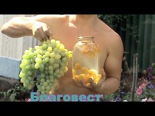 Сорта винограда видео