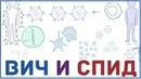 ВИЧ и СПИД - патогенез, причины признаки, симптомы, передача