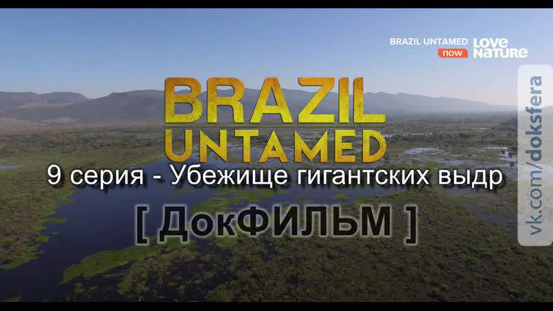 Дикая Бразилия 9 серия Убежище гигантских выдр