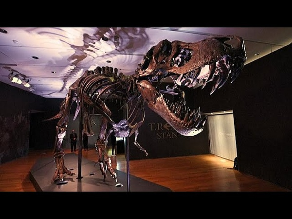 One of the largest T rex skeletons set to go up for auction