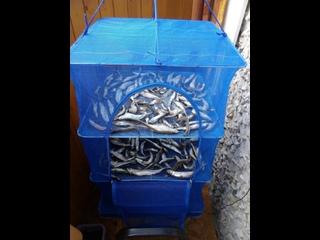 Складная сетка сушилка для овощей рыбы подвесная 50:50:95 большая