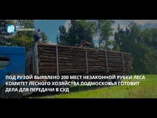 Под Рузой выявлено 200 мест незаконной рубки леса
