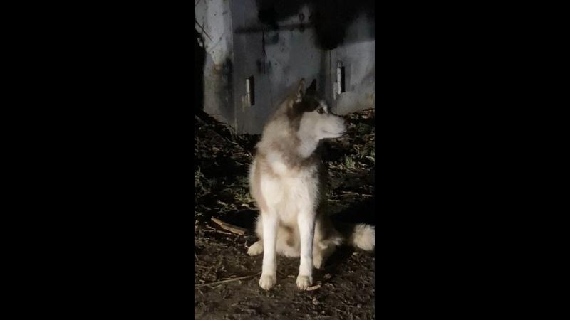 Видео от Елены Кожевниковой
