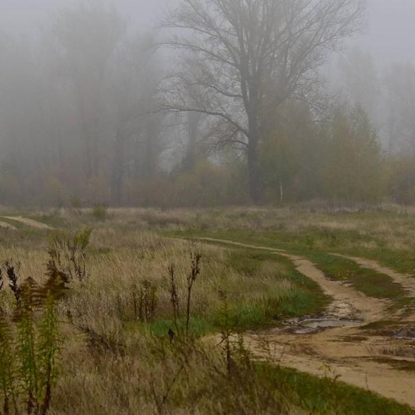 Дорога в тумане. Фото: [id491799879|Андрей Ларин]...