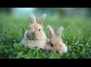 Пухлый кролик D