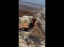 Видео от Елены Аксёновой